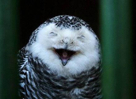 smiling_animals_10
