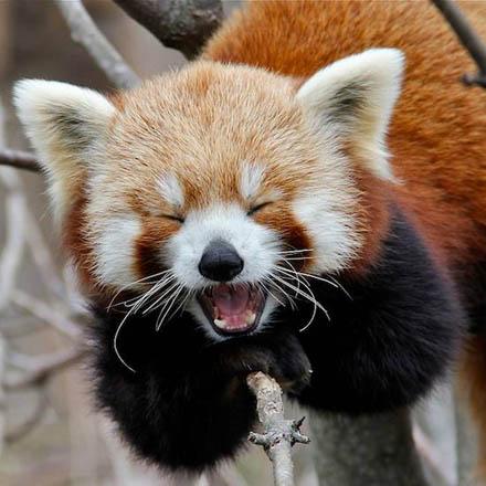 smiling_animals_13