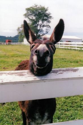 smiling_animals_2