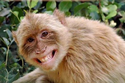 smiling_animals_4