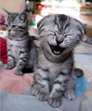 smiling_animals_7