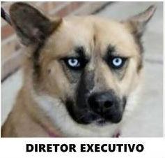 diretor-executivo
