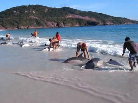 resgate-golfinhos