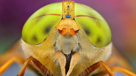 Este inseto se destaca dos outros pelos seus olhos fluorescentes