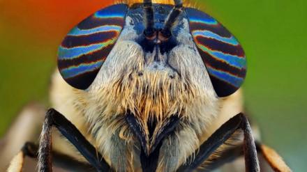Os insetos fotografados com uma objetiva macro mostram uma grande gama de cor e cada detalhe de seus olhos