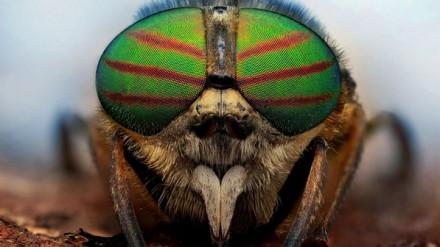 """""""Gasto muito tempo com fotografias macro, as cores e as diferentes formas dos insetos me fascinam"""", diz o fotógrafo polonês"""
