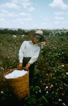 """Outra imagem inédita na """"Life"""": trabalhador em plantação em lugar não identificado no Brasil"""