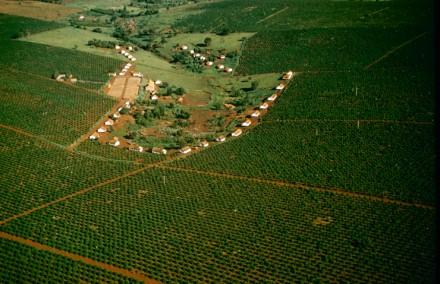 Fazenda de café no Paraná: o Brasil era então responsável por metade da produção mundial